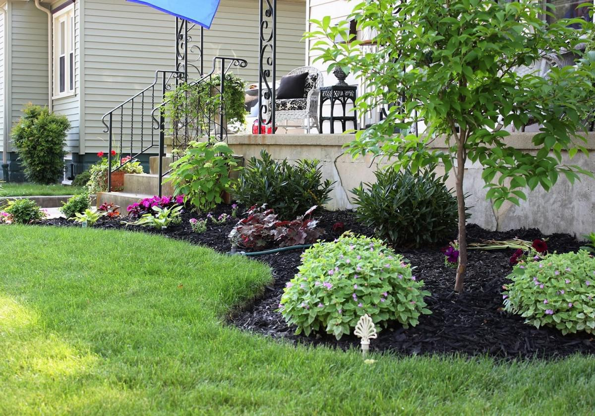 Image of: Small Trees For Landscaping Style