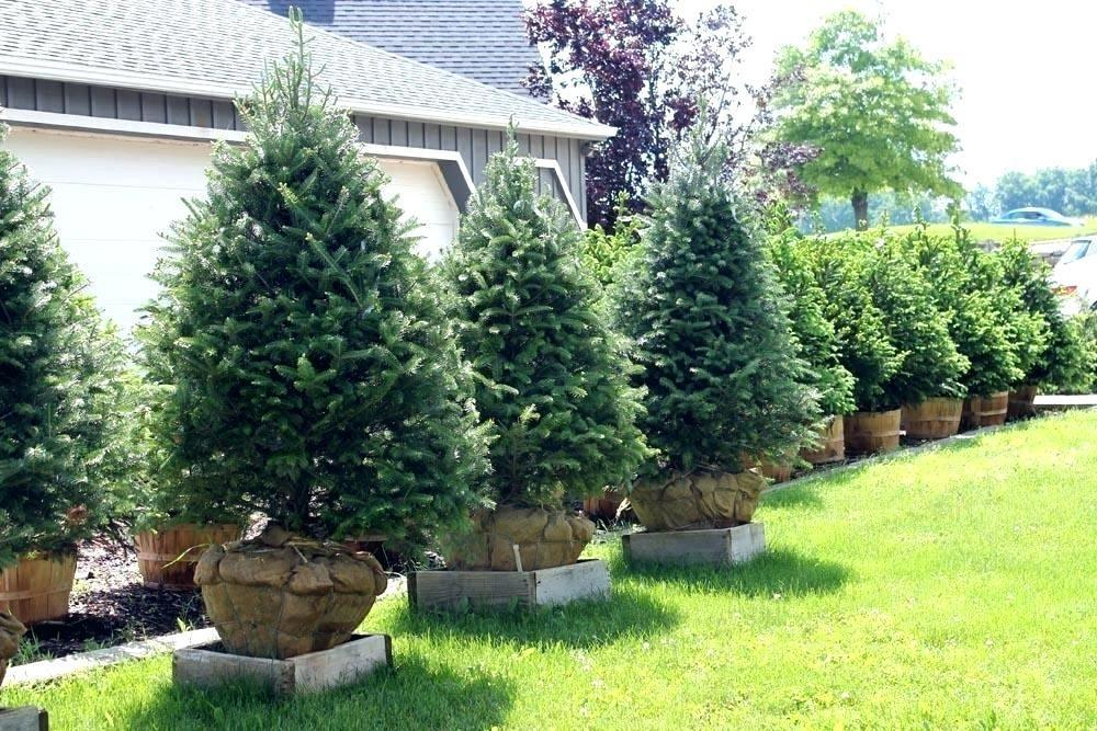 Image of: Small Trees For Landscaping