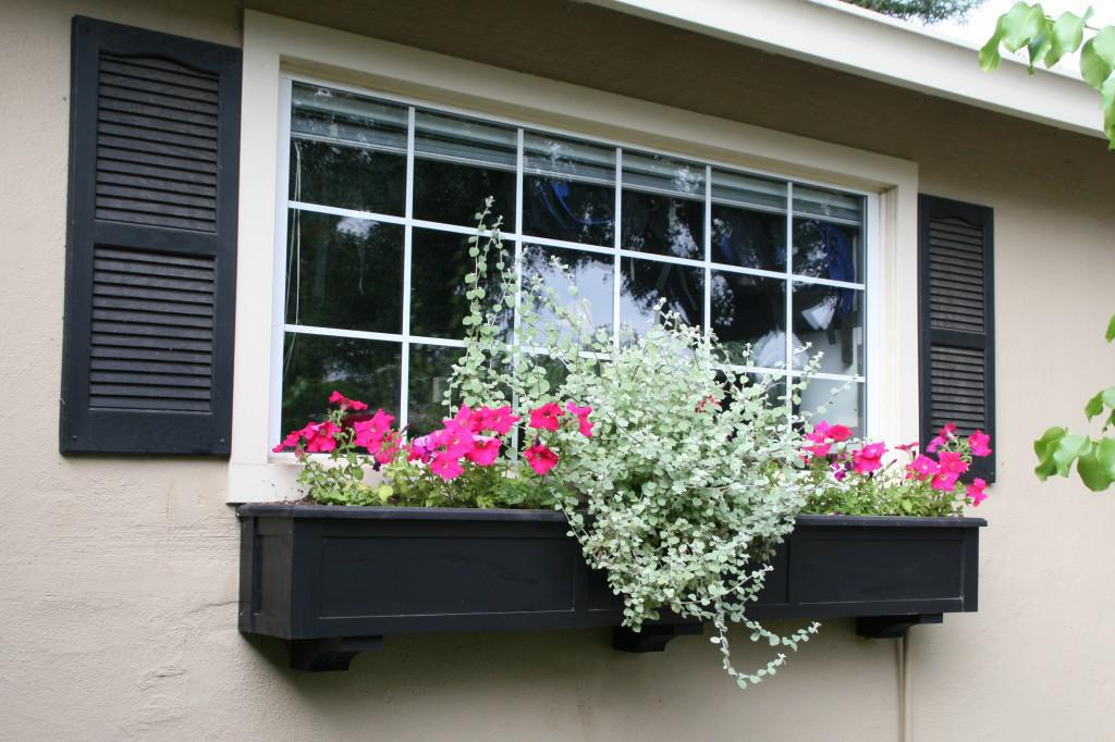 Image of: Window Box Ideas For Shade