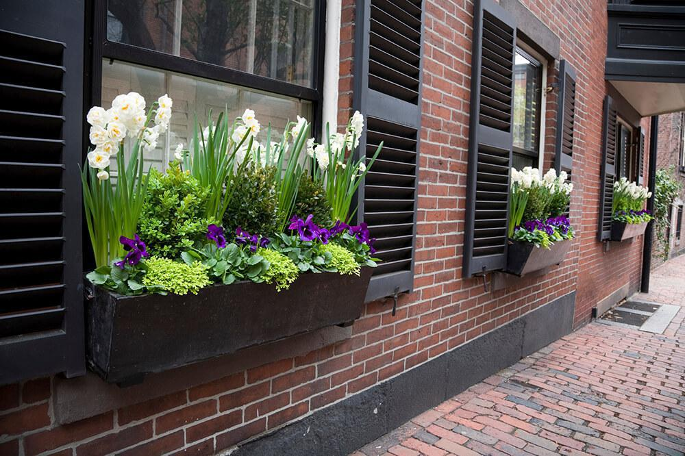 Image of: Elegant Window Box Ideas