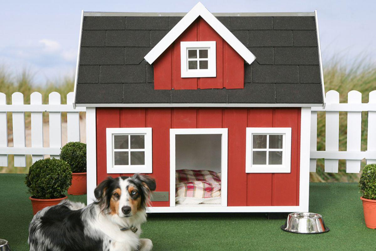 Image of: Awesome Pet House Ideas