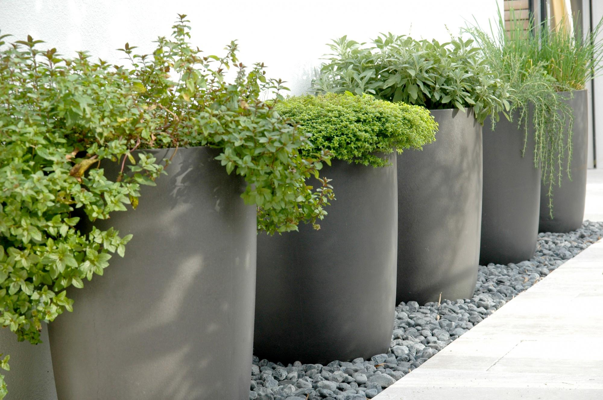 Image of: Plant Pots Cheap Ideas