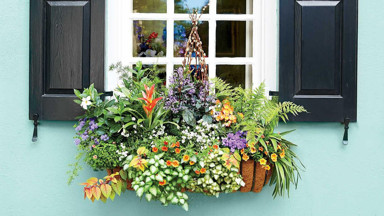 Image of: Awesome Window Box Flower Ideas